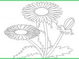 Раскраски: Красивая ромашка