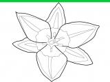 Раскраски: Красивый цветочек