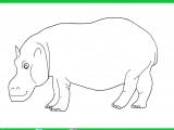 Раскраски: Бегемот