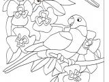 Раскраски: Попугаи