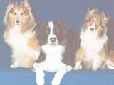 Пазлы: Dogs Trio