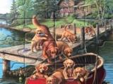 Puzzle Mania Dog Paddle