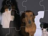 Мир пазлов: собаки