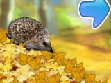 Forest Hedgehog